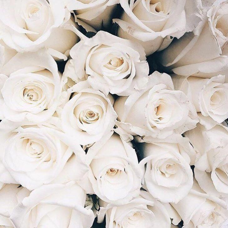 White Roses Roses White Pastel Photography Bouquets Plain