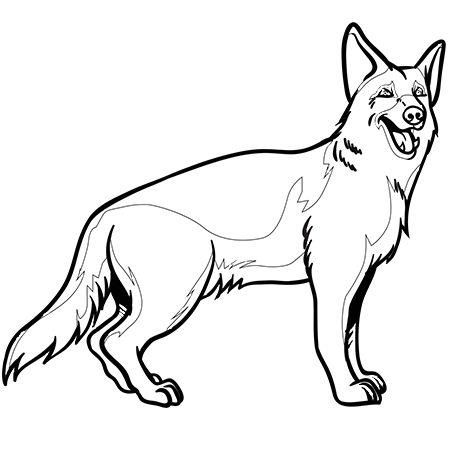 Dessin chien berger allemand a colorier dessin colorier - Dessin bebe chien ...