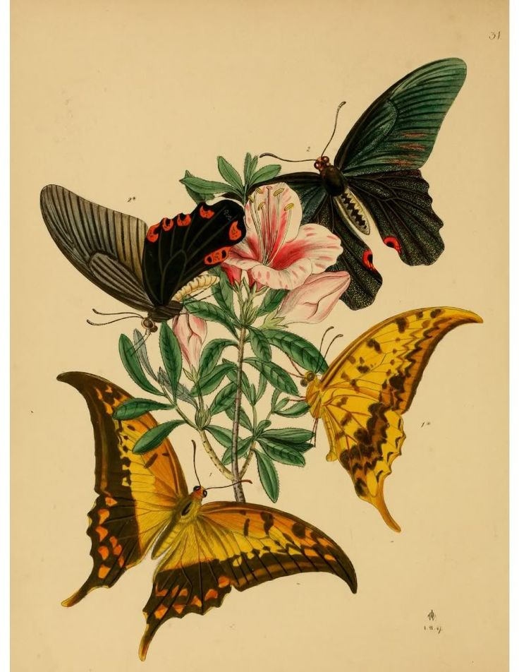 106 Best Old Scientific Illustrations Insects Images On