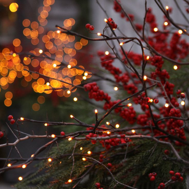 Twig Lights in Garden+Outdoor COLLECTIONS Doorstep Decorating at Terrain: