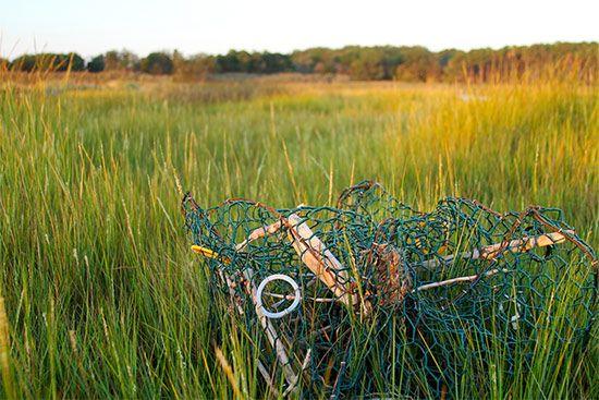 Chesapeake Bay Blue Crab Traps