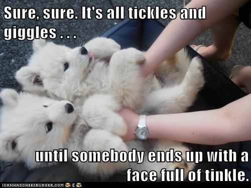 haw haw: Puppies, Animals, Polar Bears, Dogs, Samoyed, Pet, Polarbear, Puppys, Adorable