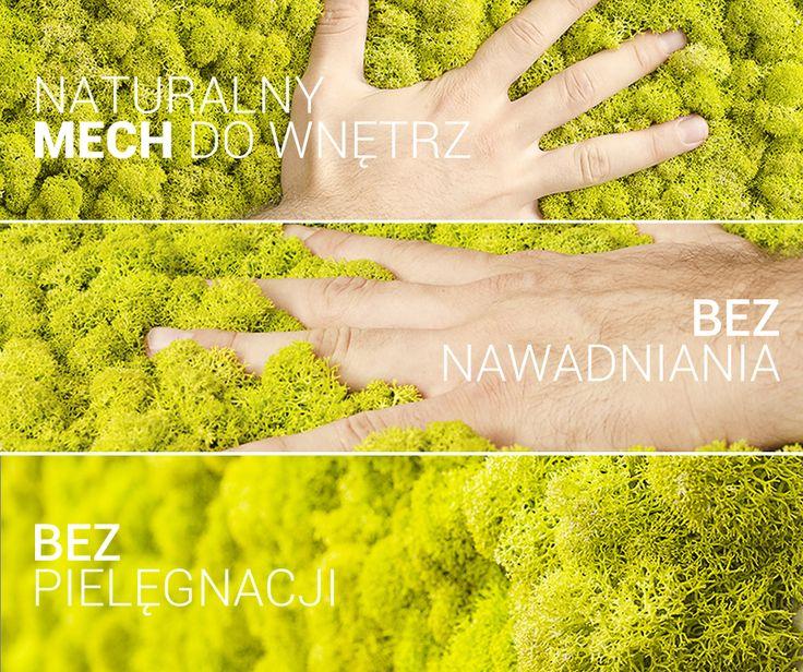 Oryginalny mech Moss Trend!  #mech #wnętrza #projektowanie #natura #aranżacja
