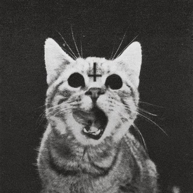 Czy plaga Czarnej Śmierci to efekt urządzonej przez papieża Grzegorza IX krucjaty przeciw kotom? - Joe Monster