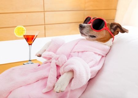 Relaxing - red, vara, sunglasses, jack russell terrier, summer, situation, caine, animal, dog, funny, drink, spa