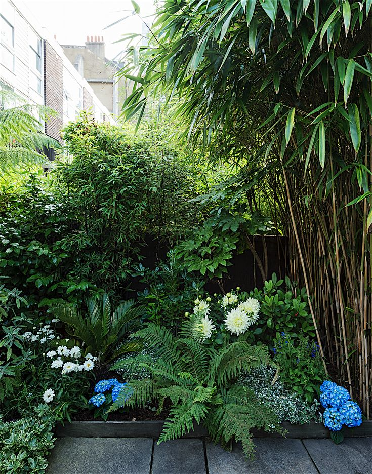 Urban Space: Getting My London Garden to Love Me Back