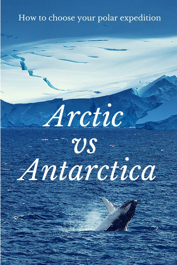 155 best visit antarctica images on pinterest travel for How to go to antartica