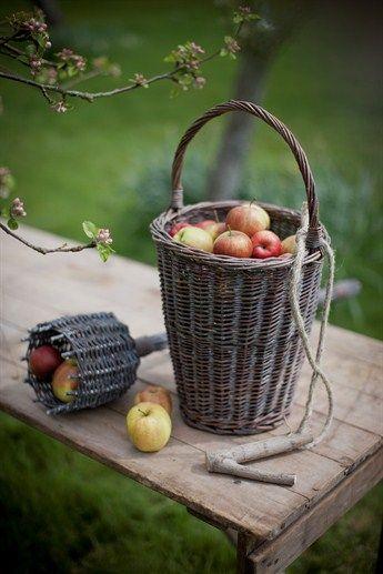 Les bonnes pommes du jardin