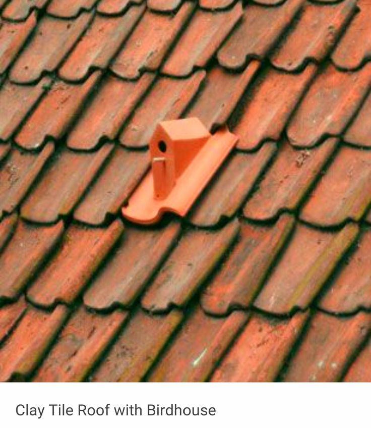 Bird house on roof