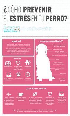 El estrés en perros puede ser causado por factores que interrumpan su rutina. Es muy importante que identifiques las causas. ¿ Cómo saber si mi perro sufre de estrés? http://mi.ciudaddemascotas.com/perros/estres