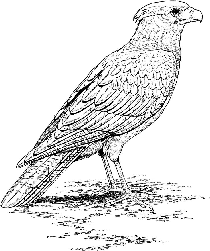 Eagle Realistic Animal Coloring Pages