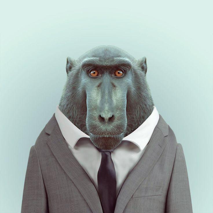 Yago Partal, Zoo portrait: macaque
