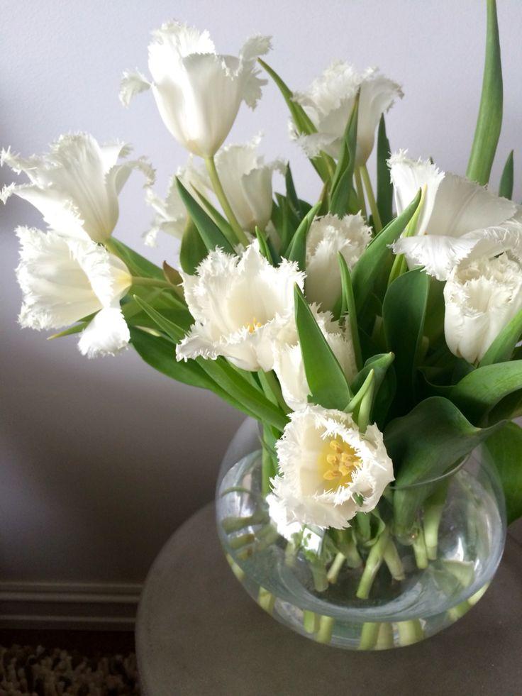 "Interiør-tulipaner ""Cambridge"""