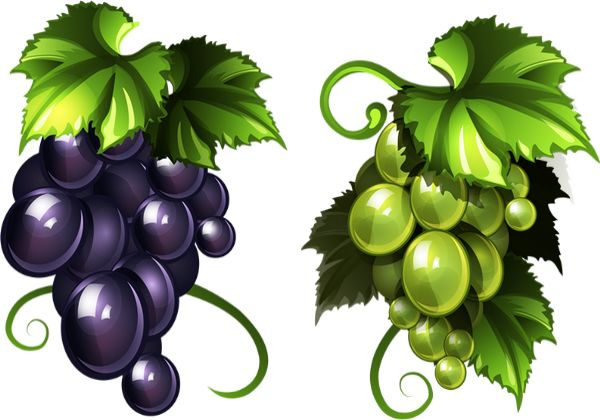 Czerwone winogrona, Białe winogrona: png - Winogrona - Trauben png