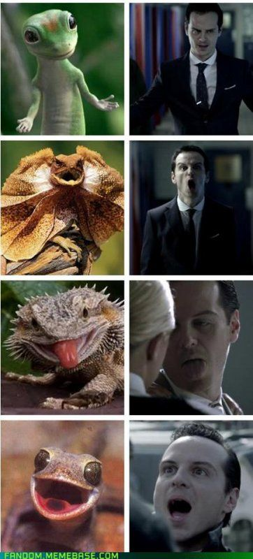 Confirms my suspicion that Jim Moriarty is in fact a Lizard Person.- the gieco gecko omg!