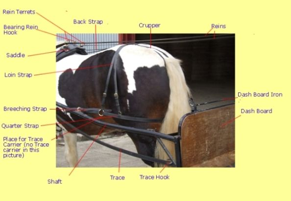 <b>Harness</b> <b>Parts</b> Explained With Graphics