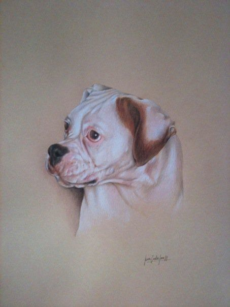 Boxer - Lápices de colores - 43 x 30 cms