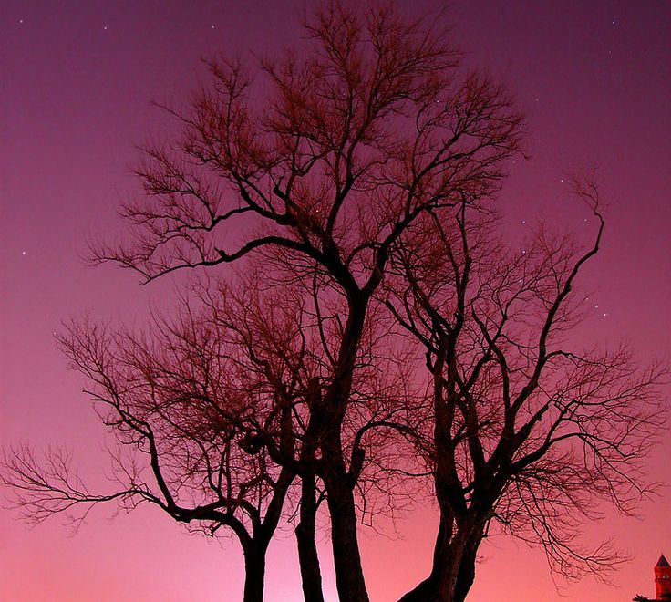 #Langzeitbelichtung #Baum #Natur  http://www.digital-fotografie.us/2011/02/06/langzeitbelichtungen-teil-2-ausruestung/