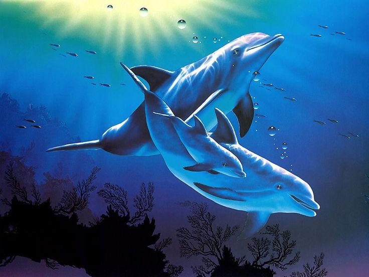 Delfiner - skrivbordsbakgrund: http://wallpapic.se/djur/delfiner/wallpaper-30554