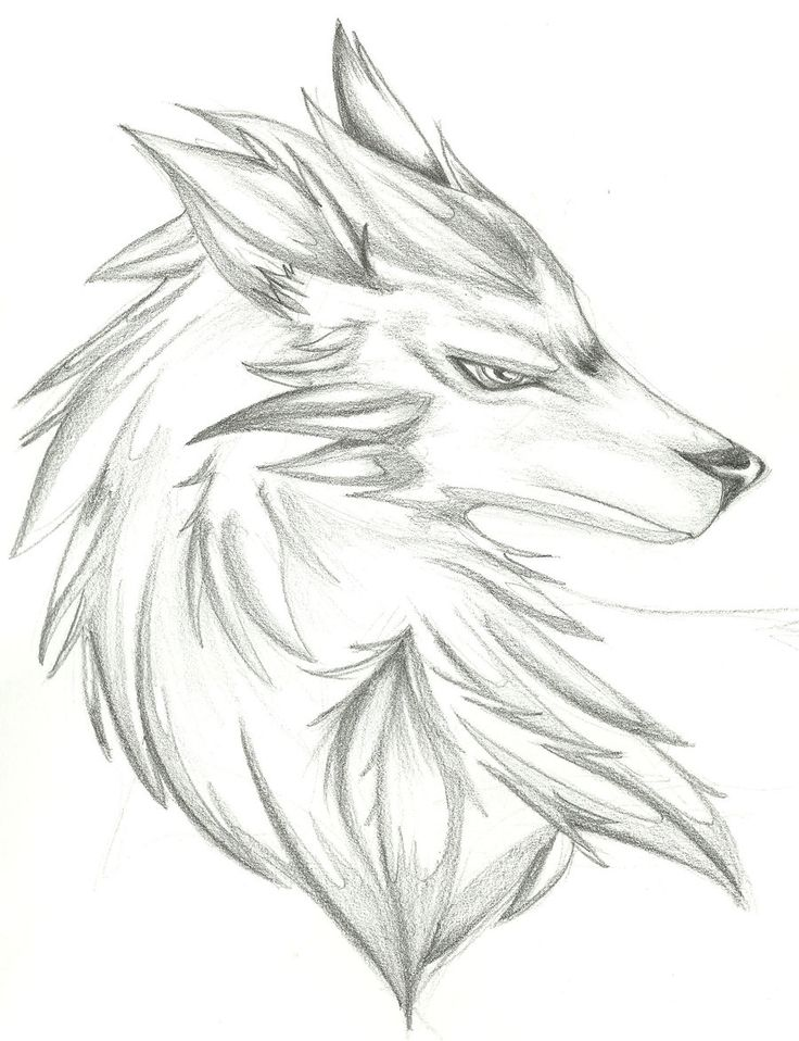 Best 25+ Wolf drawing easy ideas on Pinterest | Wolf ... Easy Wolf Head Drawing