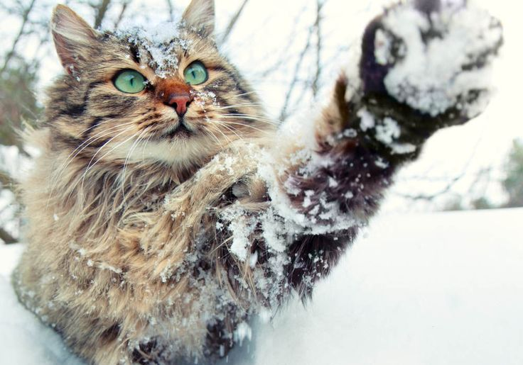 24 #Photos of Truly Adorable #Animals in #Snow