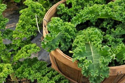 Cityline 21-day boot camp: Day 10! Incorporate leafy kale into your meals and get into a positive mindset!