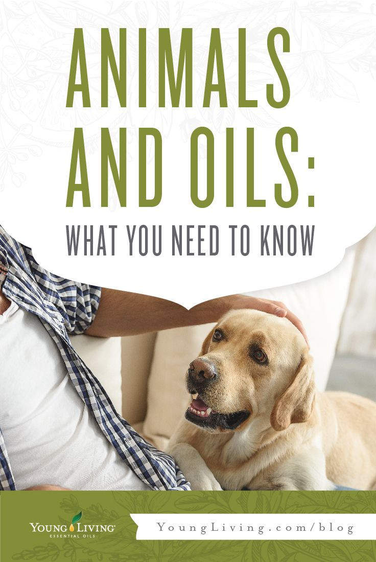 We often get asked the question: Can I use essential oils on my animals? The answer is yes! Check out how on the blog!