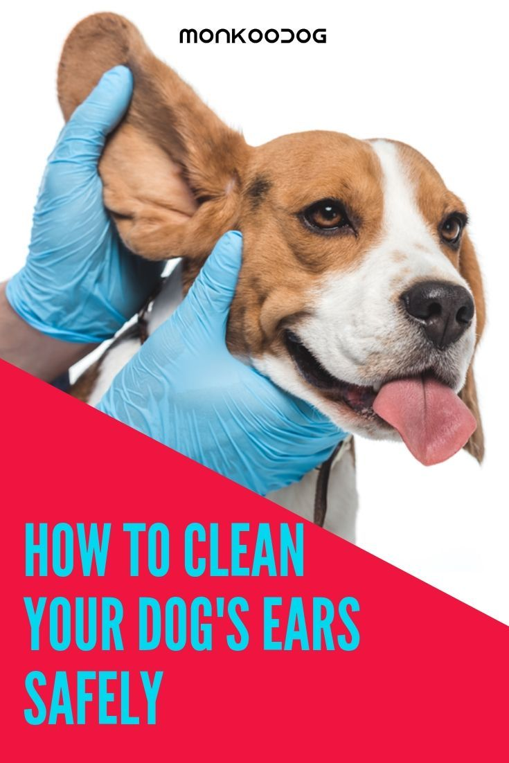 How to clean your dogs ears safely your dog smart dog