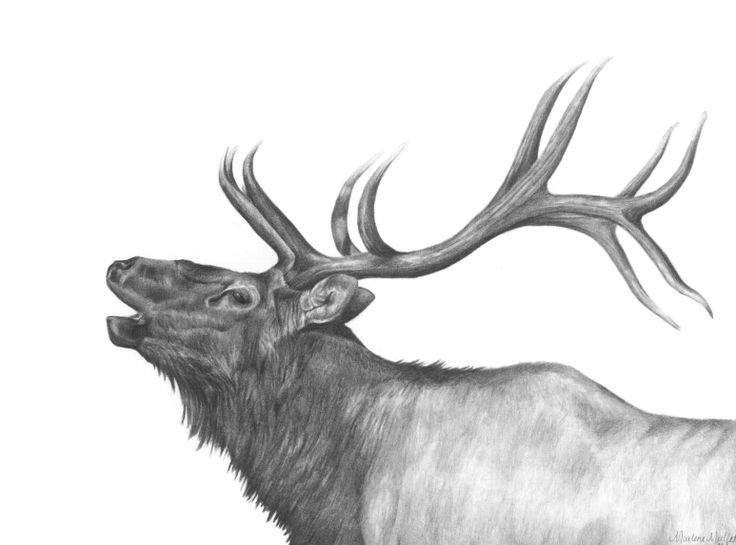 Elk done in graphite pencil by Marlene Mullet | Elk ...