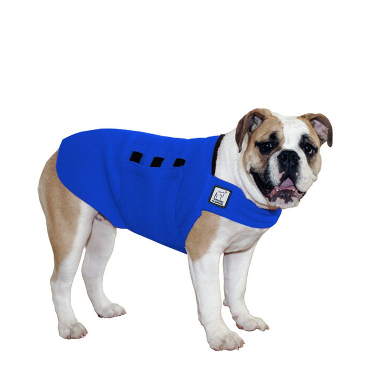 Blue English Bulldog Dog Tummy Warmer, great for warmth, anxiety and laying with our dog rain coat. High performance material. Made in the USA.