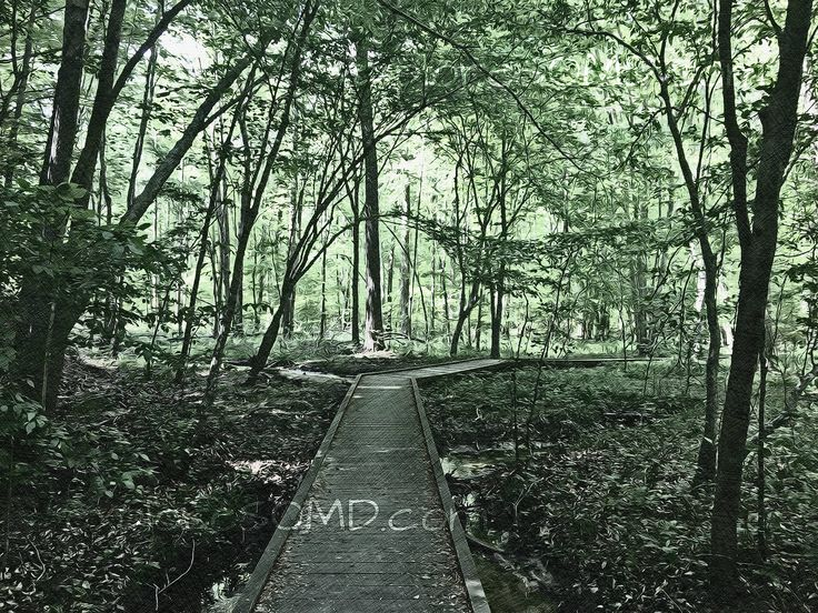 @exploresomd local artwork available on Etsy featuring Gilbert Run Park in Charles County, MD!