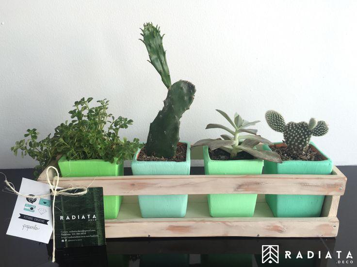 Caja decorativa... Materitos y plantas que le darán un nuevo aire a tus espacios... RADIATA. DECO - Diseñamos un estilo de vida -  ♻️