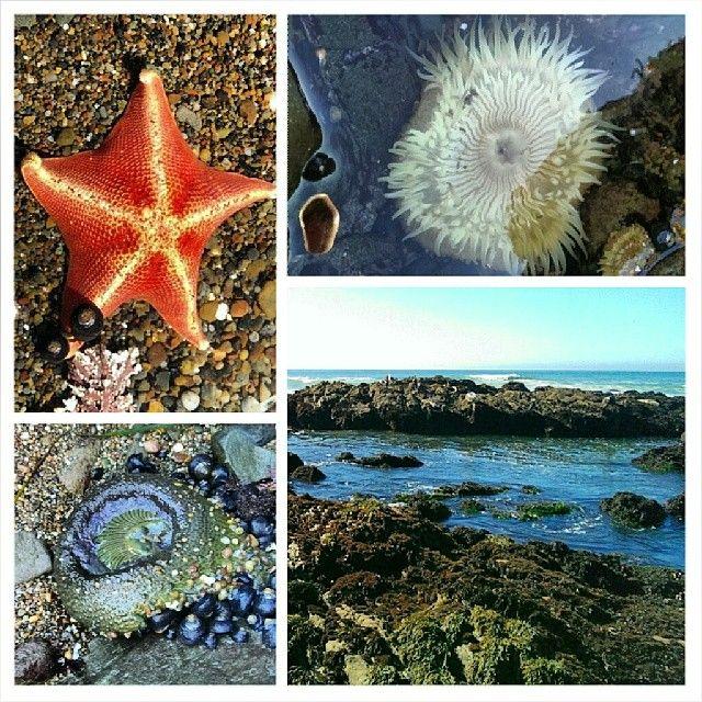 Moonstone Beach | Cambria, CA