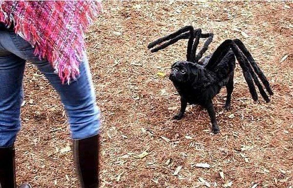 Spider Mutt | 10 Easy DIY Halloween Costumes For Your Pets...this would be amazing for my dog!