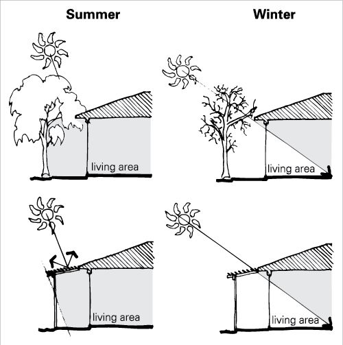 Shading A Deciduous Tree Near The Living Area Of A House