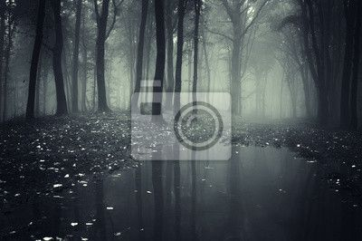 Wall Mural pond in a forest with fog - wild • PIXERSIZE.com