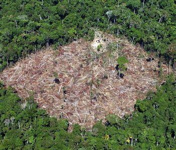 Başbakandan Amazon Fonu Uyarısı