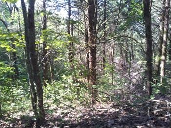 667 E Lehigh, Newport, TN 37821, USA - Unrestricted Land in Cocke County - real estate listing