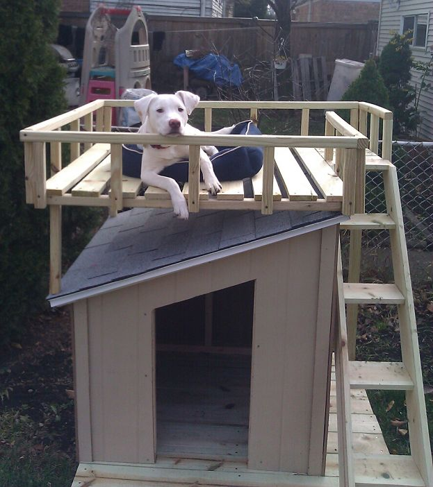 http://thehomesteadsurvival.com/dog-house-roof-top-deck-diy-project/#.UaueRVfm9A4  Dog House with Roof Top Deck DIY Project