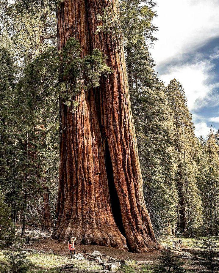 Se fôssemos destinados a ficar em um lugar teríamos raízes  em vez de pés.  autor desconhecido  Foto: Parque Nacional Sequóias and Kings na Califórnia por @kenton_steryous