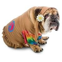 zelda-60s-hippie-halloween-dog-costume-1.jpg