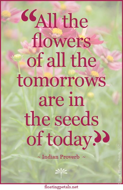 What seeds could you plant that would create the flowers of your dreams? To receive Monday's Flower Quote for Free click here: http://visitor.r20.constantcontact.com/d.jsp?llr=icgd5amab&p=oi&m=1112428091464&sit=c97rohthb&f=bb8a2154-6ca2-442a-a0e6-2eb83a5cce1d
