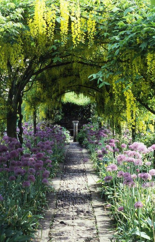Allium and Laburnum tree-lined path; Barnsley House, Gloucestershire