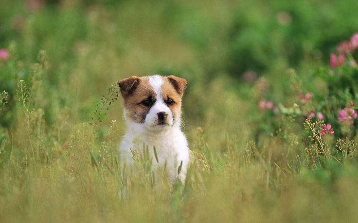 Cute Dogs And Puppies Wallpapers - Wallpaper Cave