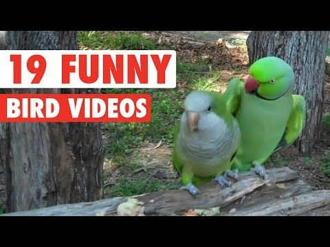 19 Funny Bird Videos || Awesome Compilation - http://funnypetvideos.net/19-funny-bird-videos-awesome-compilation/