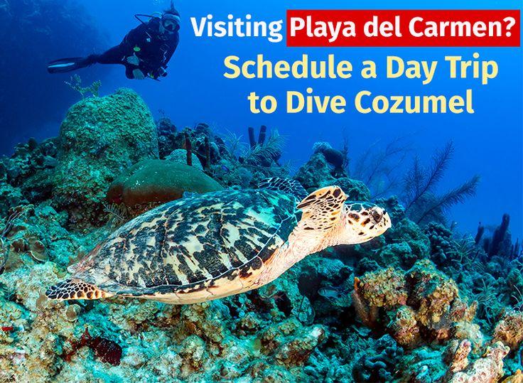 Visiting Playa del Carmen? Schedule a Day Trip to Dive Cozumel   http://www.apsense.com/article/visiting-playa-del-carmen-schedule-a-day-trip-to-dive-cozumel.html  #yachtrental #yachtrentals #yachtrentalplayadelcarmen #playadelcarmen #yacht #yachtcharters #chartersplayadelcarmen #dive #scubadiving #scubadivingcozumel #cozumel