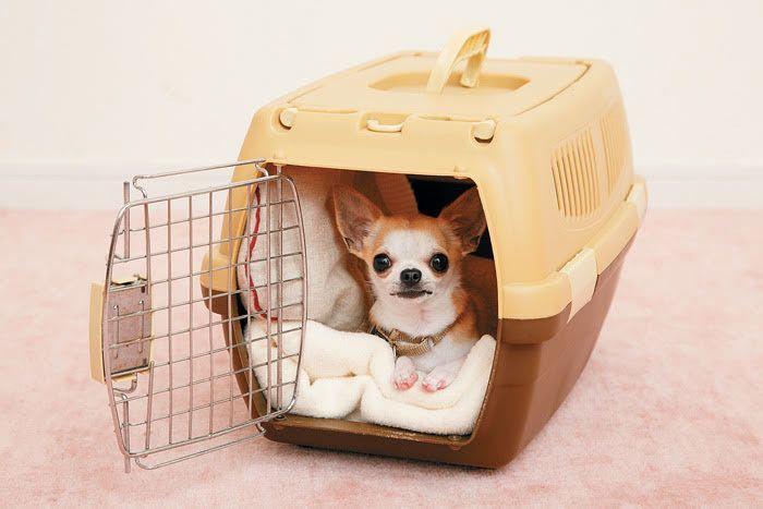 共働きでも安心 犬が快適に過ごせる8時間以上のロング留守番のコツ いぬのきもちweb Magazine 犬 クレート 犬のケージアイデア クレート 犬