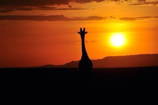 Sunset@Masai Mara, Kenya
