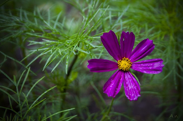 wet beauty by An Drada on 500px