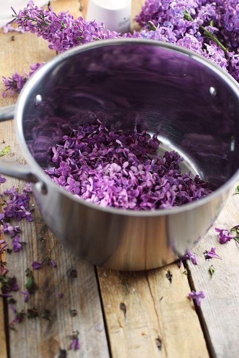 Flieder Blueten Sirup - Lilac Syrup - Fliedersirup (5)